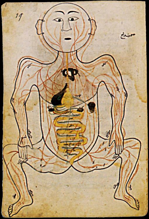 1450.  Mansour b.Eliyas Chirazi  L'Anatomie du corps (Tachrih al-badan)  Iran Cen