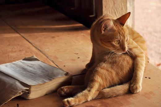 Старая книга и кот